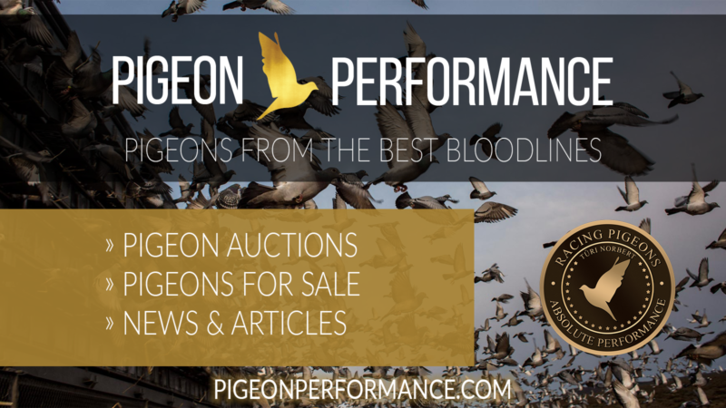 Registration   Pigeon Performance